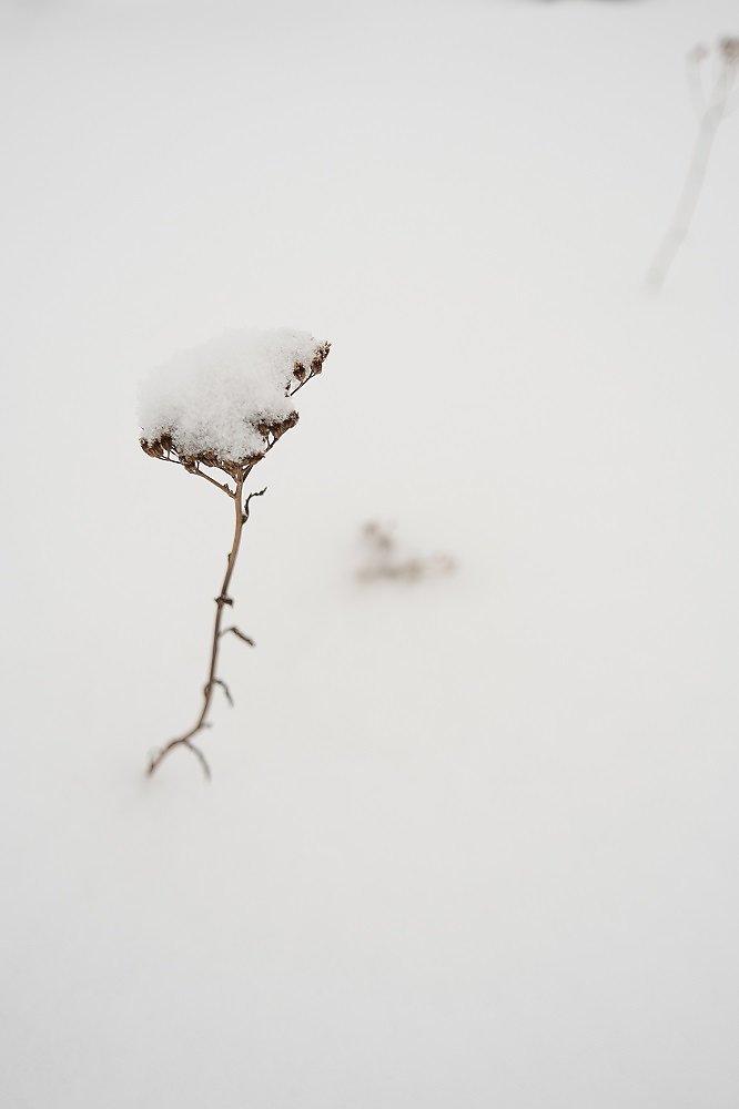 Laponie-2017-SPons-def4-18.jpg