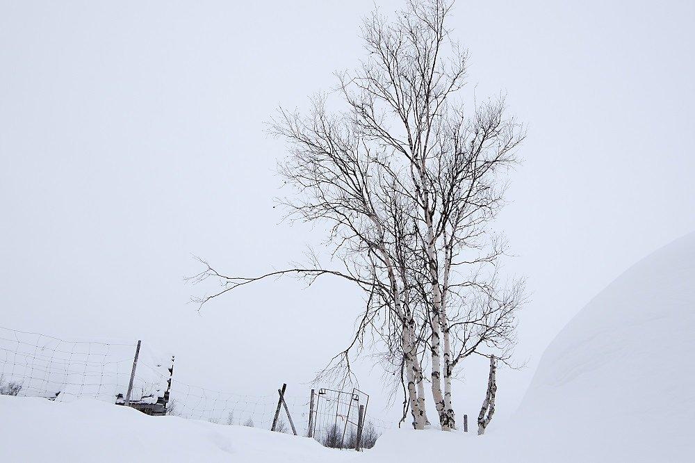 Laponie-2017-SPons-def4-34.jpg