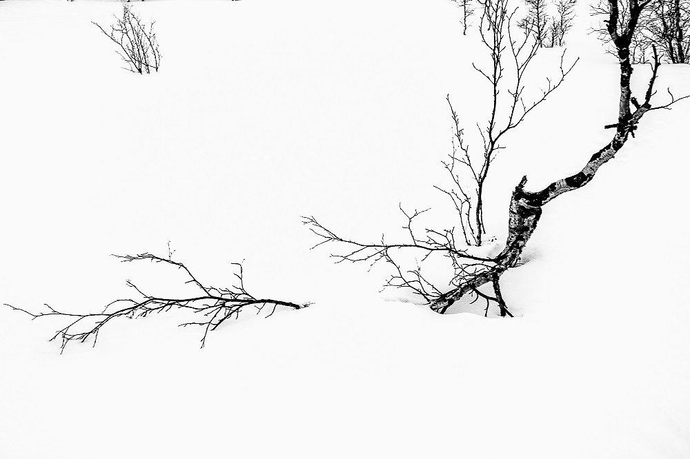 Laponie-2017-SPons-def4-91.jpg