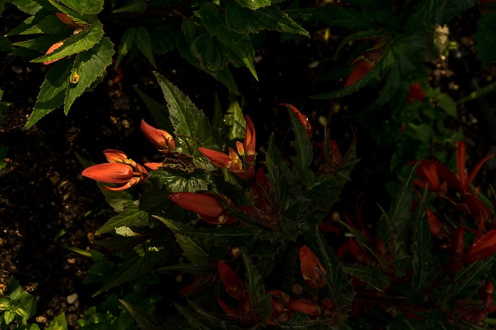 Giverny-2018-SPons-14.jpg