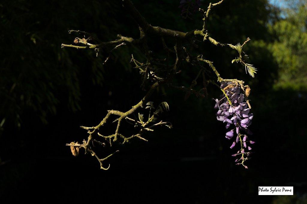 Giverny-2019-SPons-06.jpg