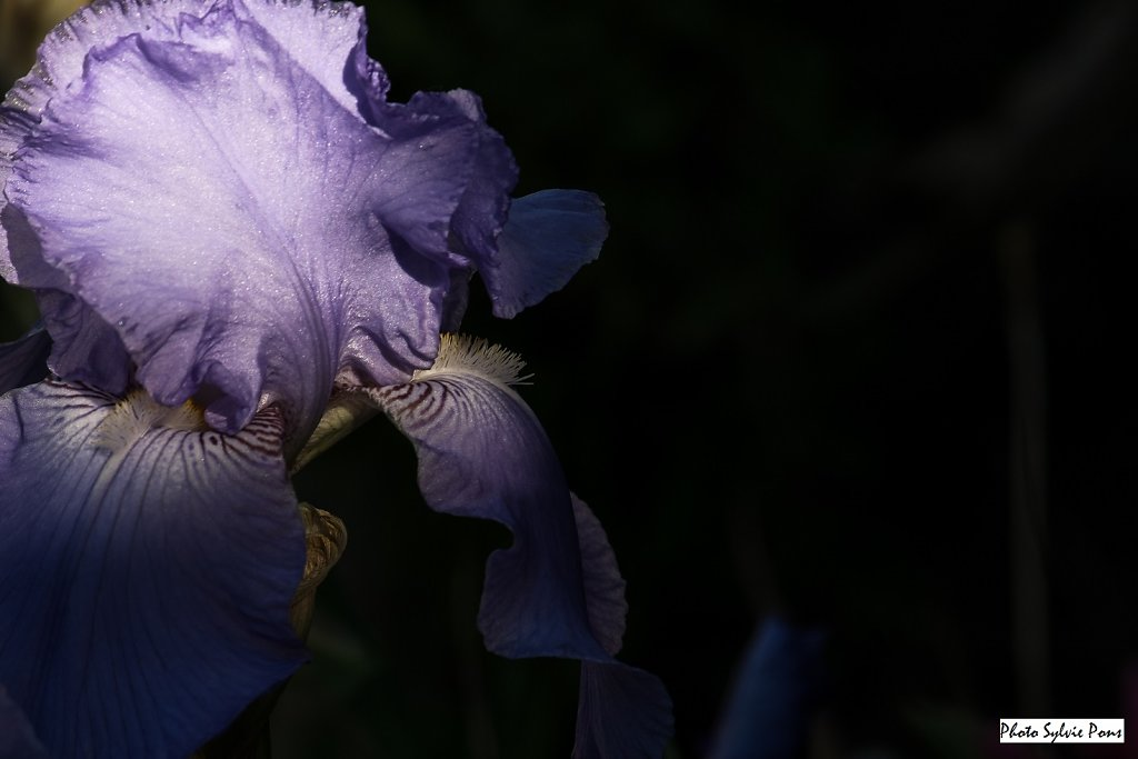 Giverny-2019-SPons-10.jpg
